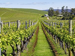 Tasmanian Wine Routes.jpg