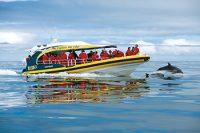 pennicott-wilderness-journeys-boats.jpg
