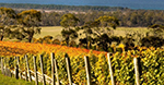 Bream Creek Vineyard.jpg